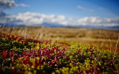Høst på Storefjell